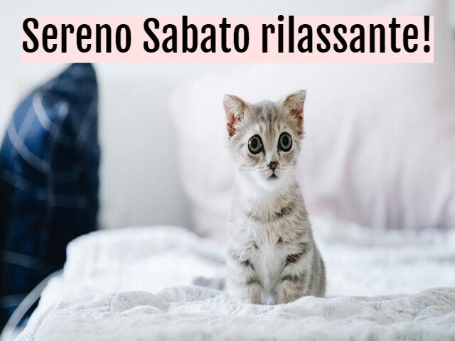 buon sabato gattini 1