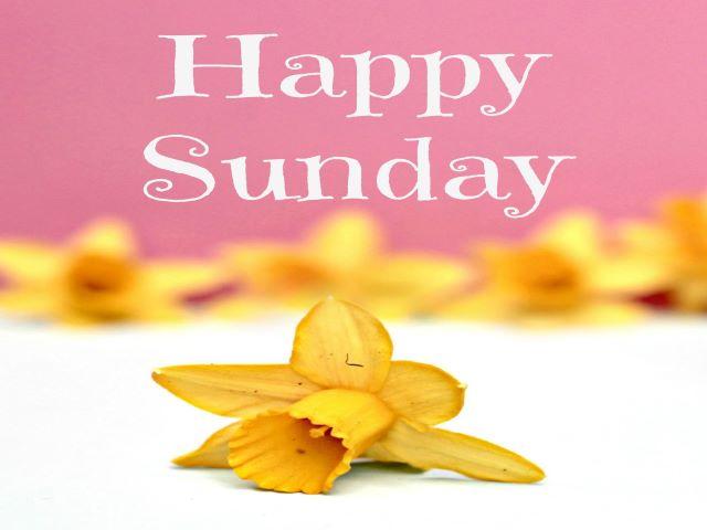 immagini di buona domenica