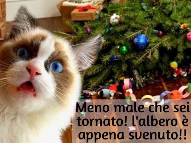 immagini divertenti natalizie
