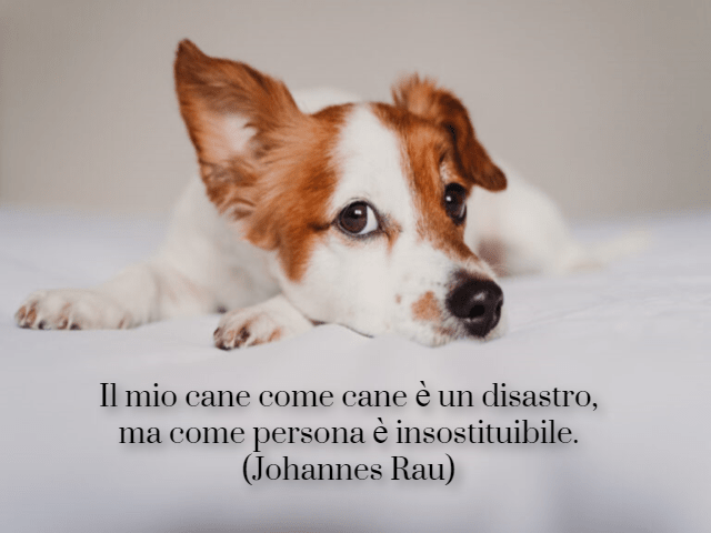 frase cane