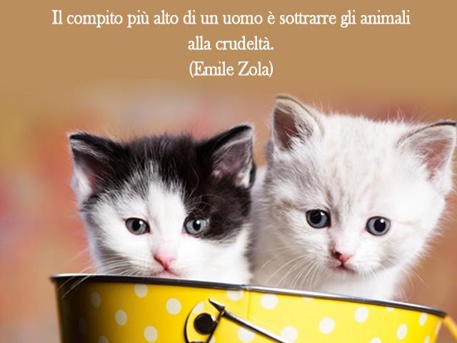 dolci gattini
