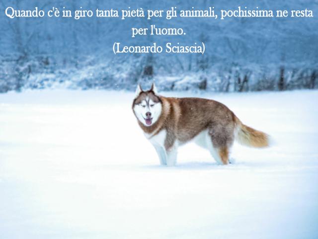 frase sugli animali cane