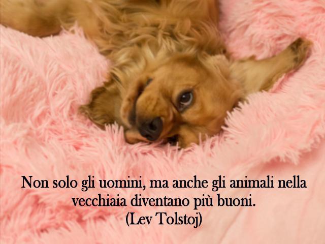 frasi sugli animali buoni