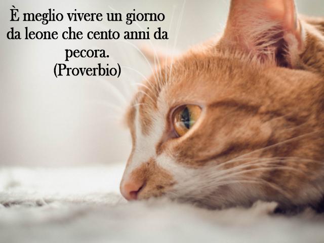 frasi sugli animali proverbio