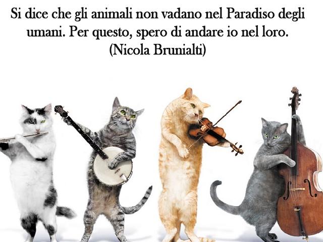 gatti che suonano