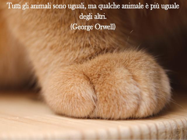 Img frasi sugli animali