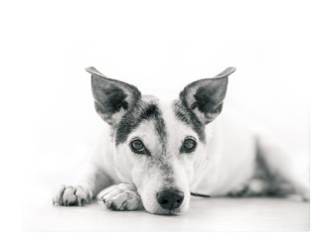 Immagini sugli animali cani