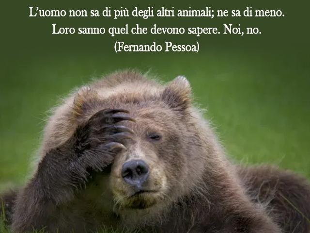 immagini e frasi animali