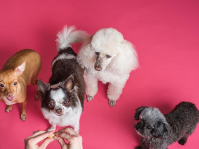 immagini sugli animali cani piccoli
