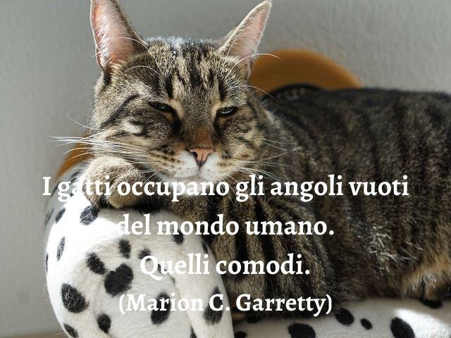 frase di gatti