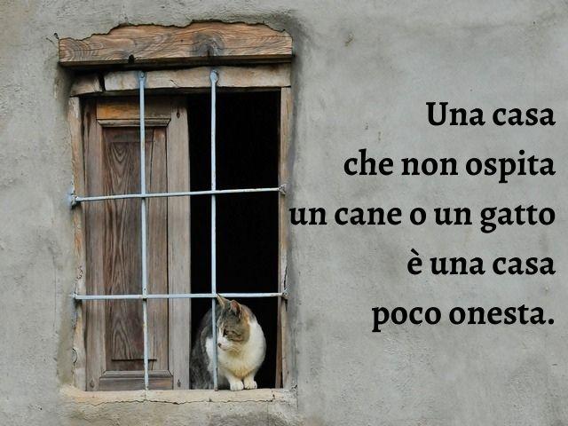 frase famosa gatto