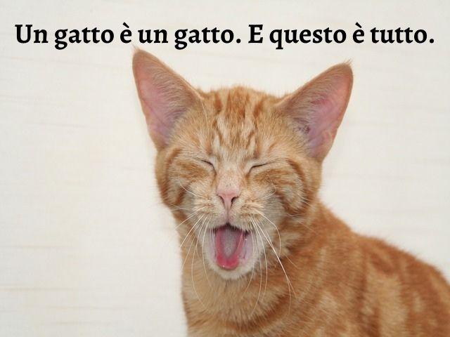 frase su gatti