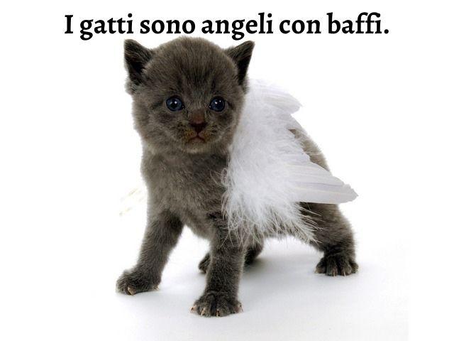 frasi famose gatti