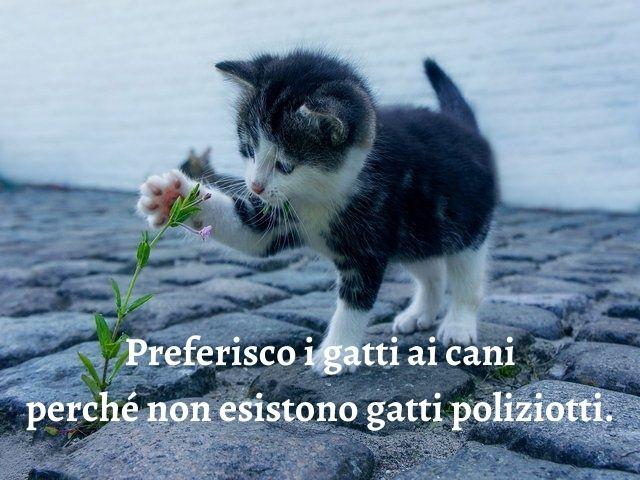 gatti frasi